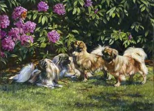 Tibetan Spaniel Painting:Artist Unknown