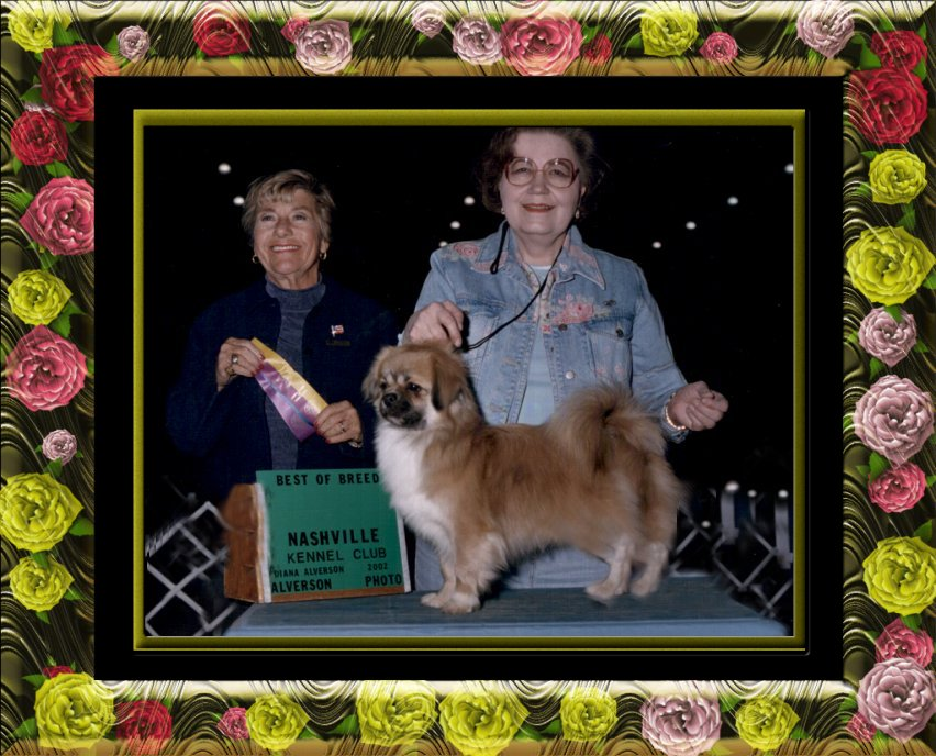 Ch Gin-Tai's The First Edition, 'EDDIE', shown going BEST of BREED with Breeder/Owner/Handler, Kathryn E. Phillips!